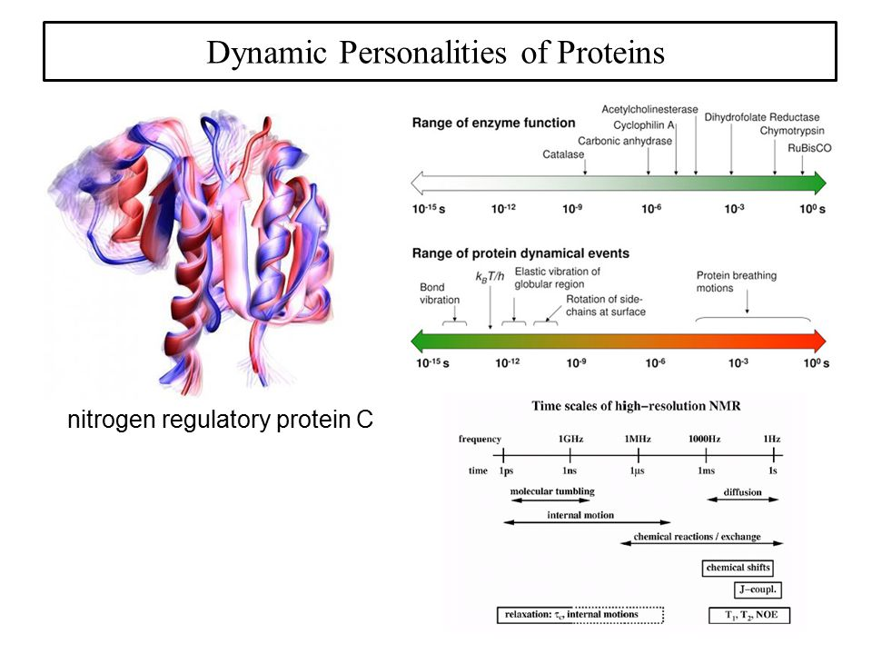Dynamic Personalities of Proteins nitrogen regulatory protein C
