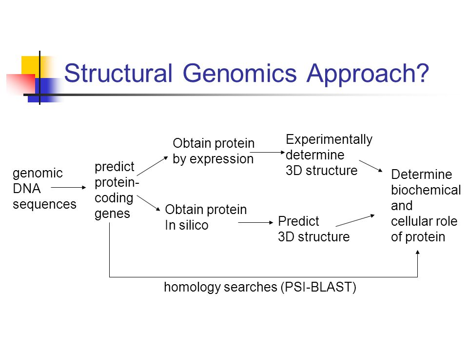 Structural Genomics Approach? genomic DNA sequences predict protein- coding genes Obtain protein by expression Obtain protein In silico Experimentally