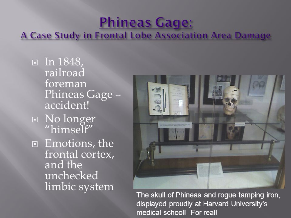  In 1848, railroad foreman Phineas Gage – accident.