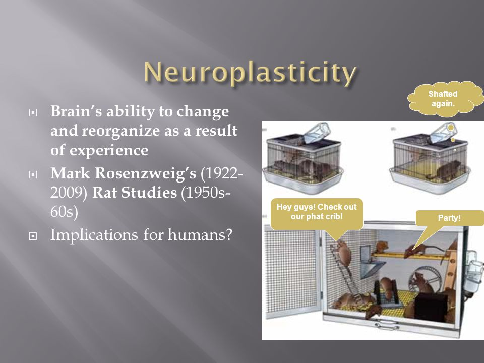  Brain's ability to change and reorganize as a result of experience  Mark Rosenzweig's (1922- 2009) Rat Studies (1950s- 60s)  Implications for humans.