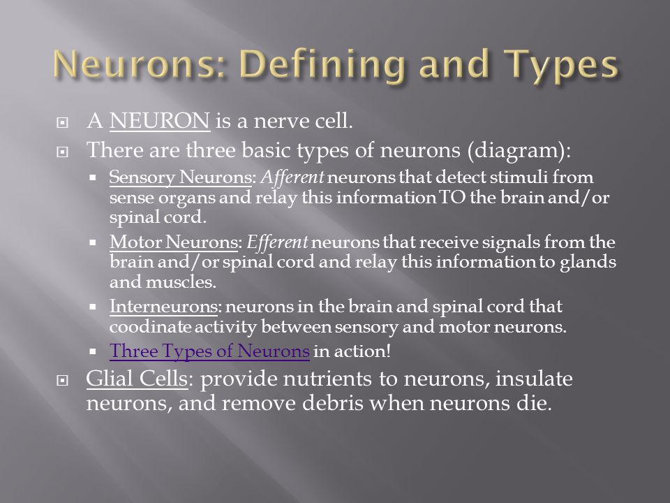  A NEURON is a nerve cell.