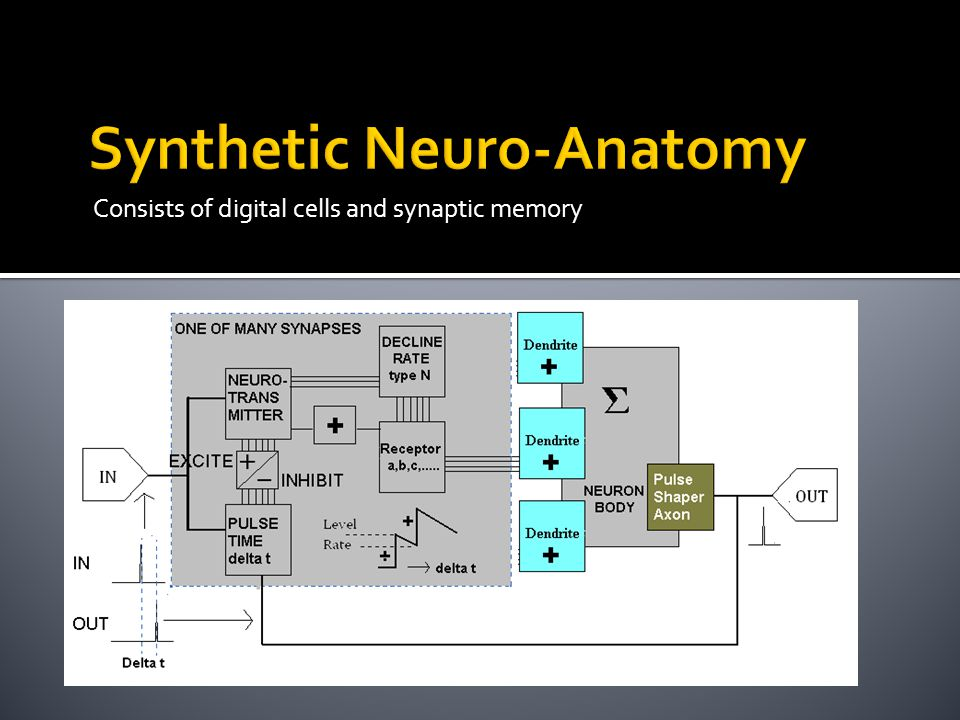 Consists of digital cells and synaptic memory