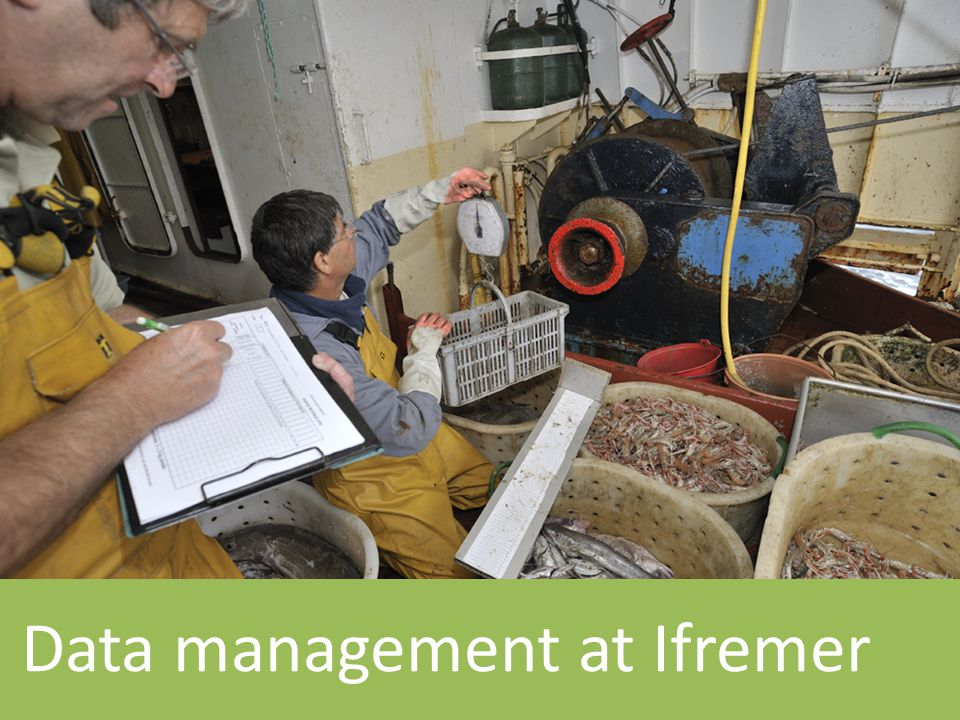 Data management at Ifremer