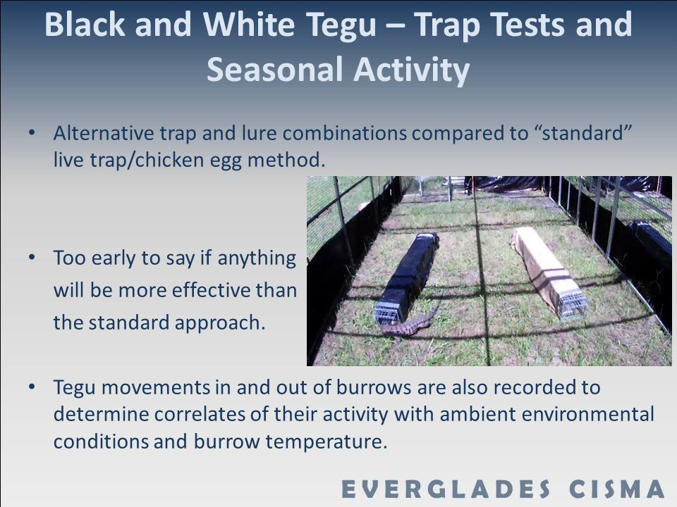 "Black and White Tegu – Trap Tests and Seasonal Activity Alternative trap and lure combinations compared to ""standard"" live trap/chicken egg method. To"
