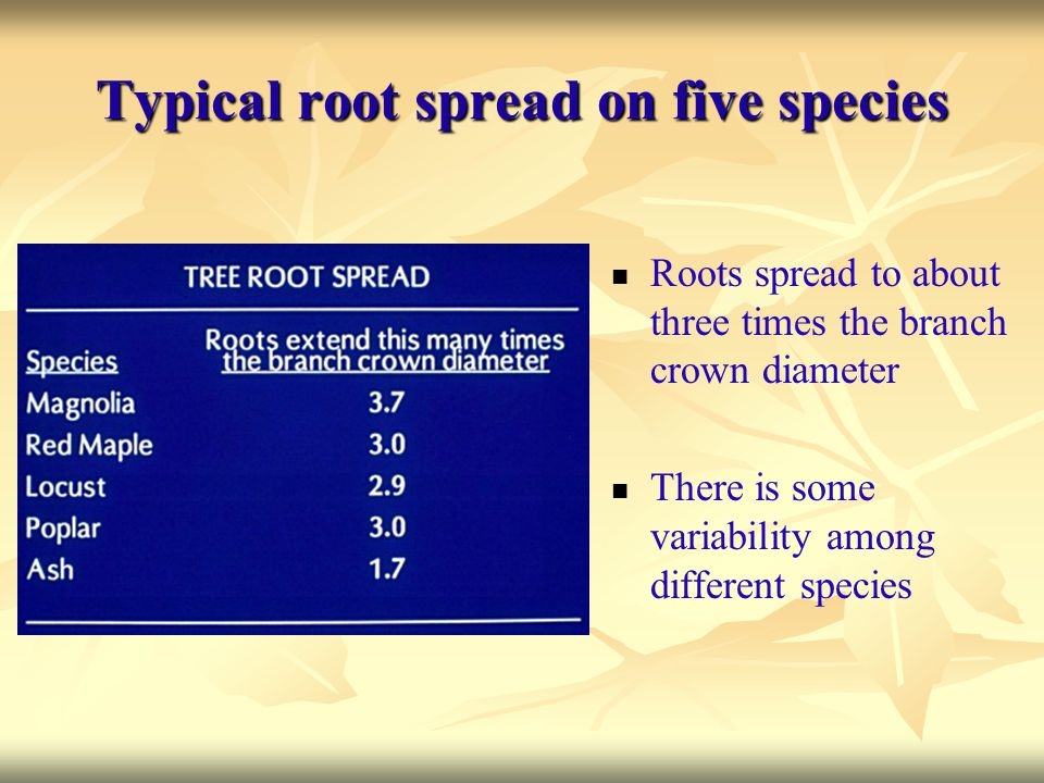 Typical root spread on five species Roots spread to about three times the branch crown diameter There is some variability among different species