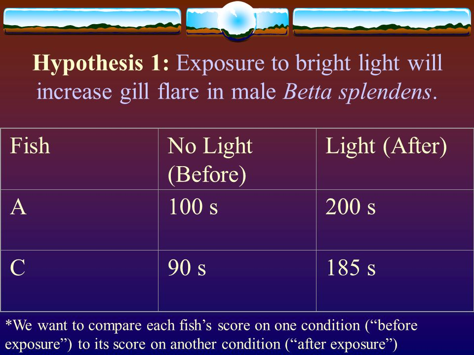Hypothesis 1: Exposure to bright light will increase gill flare in male Betta splendens.