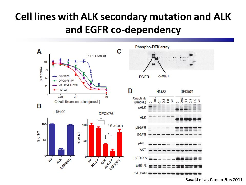 Cell lines with ALK secondary mutation and ALK and EGFR co-dependency Sasaki et al. Cancer Res 2011