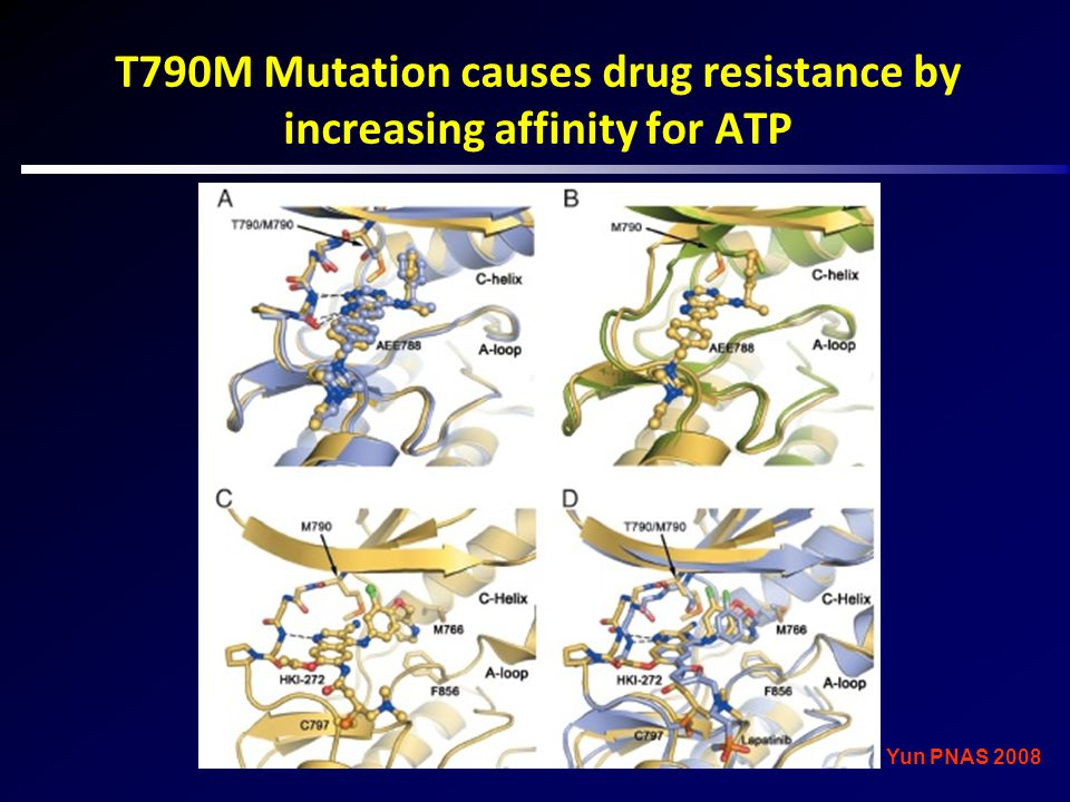 T790M Mutation causes drug resistance by increasing affinity for ATP Yun PNAS 2008