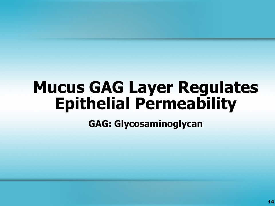 14 Mucus GAG Layer Regulates Epithelial Permeability GAG: Glycosaminoglycan