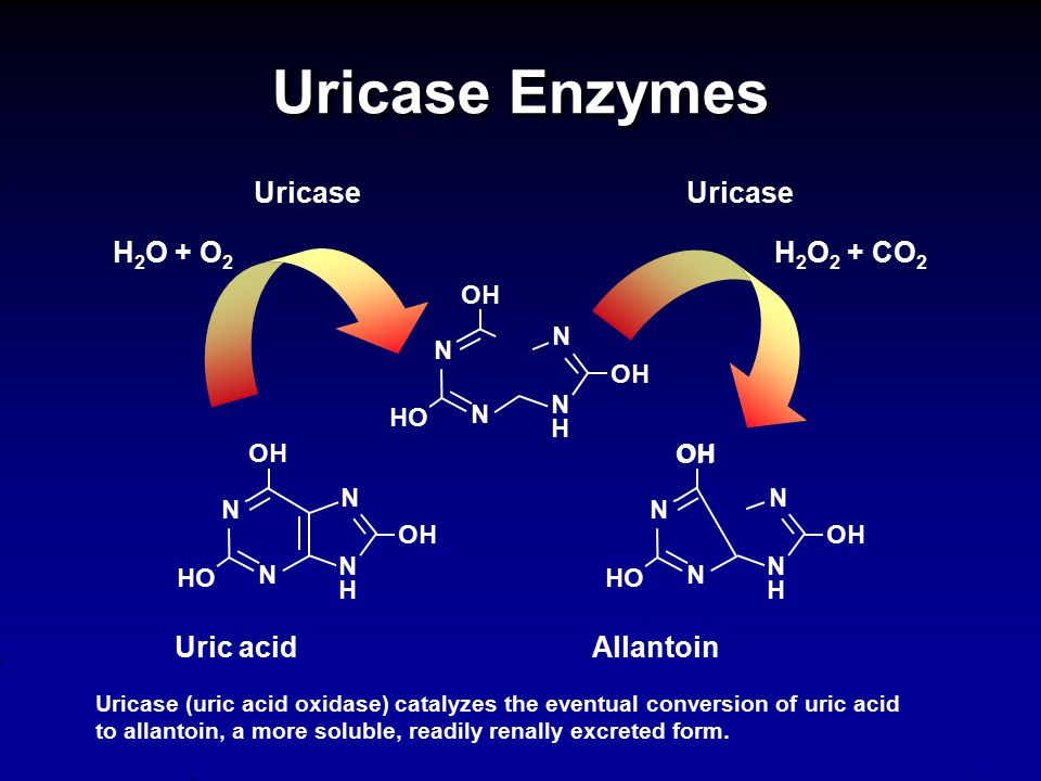 Uricase Enzymes Uricase (uric acid oxidase) catalyzes the eventual conversion of uric acid to allantoin, a more soluble, readily renally excreted form