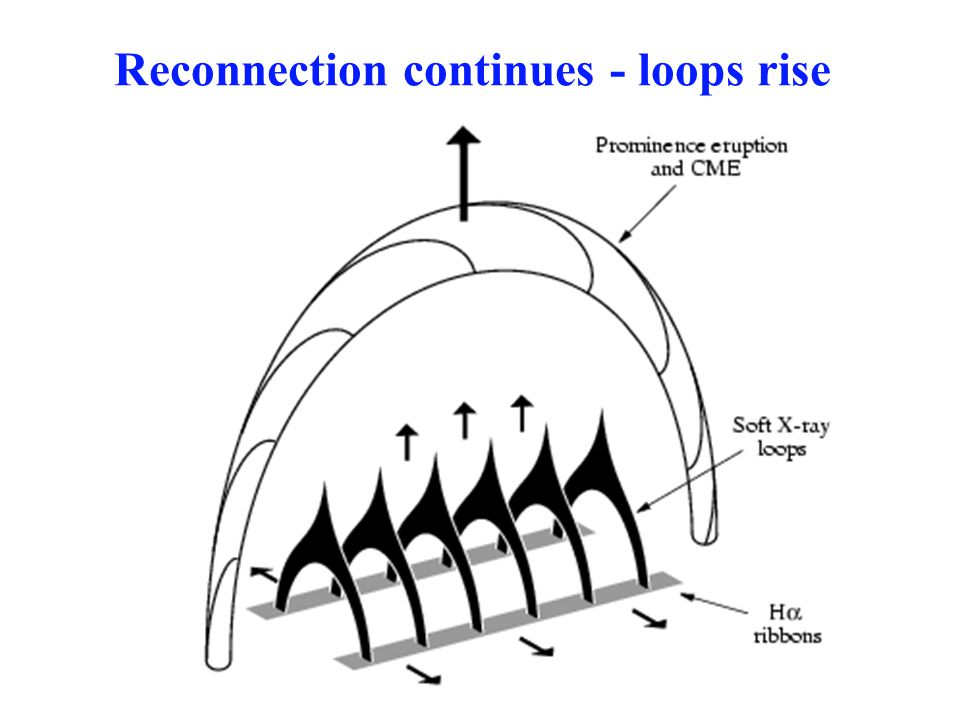 Reconnection proceeds -- loops rise Chromosphere Reconnection heats loops/ribbons