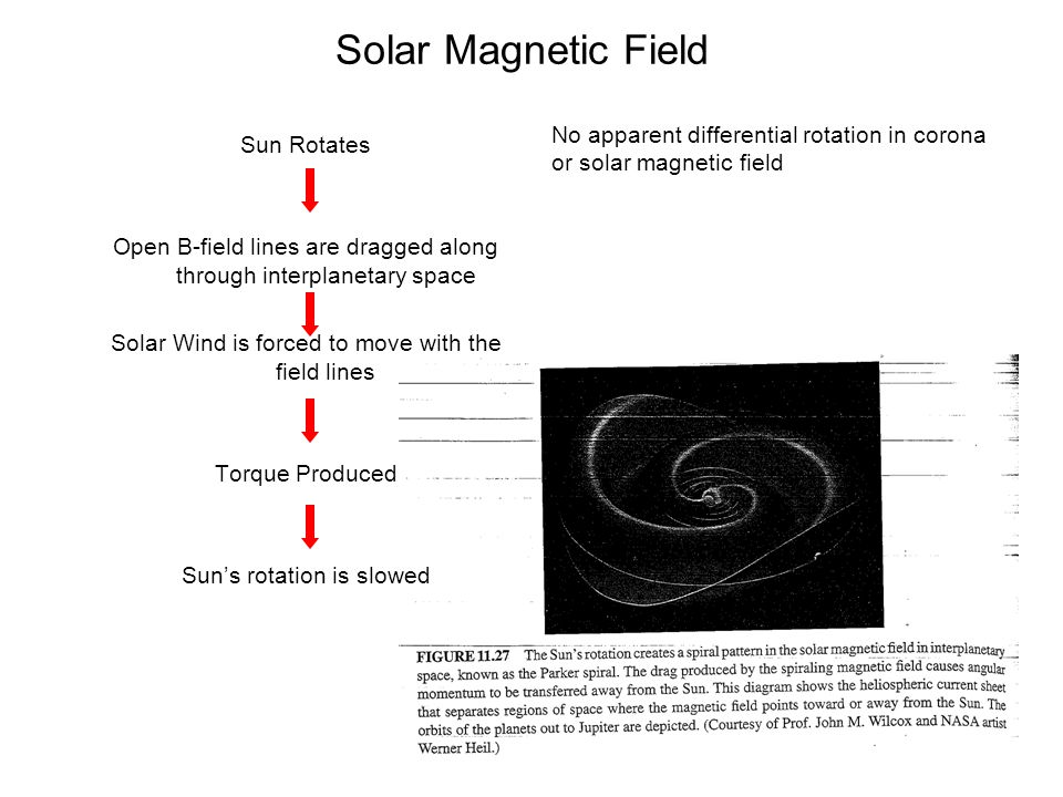Solar Magnetic Field Sun Rotates Open B-field lines are dragged along through interplanetary space Solar Wind is forced to move with the field lines T