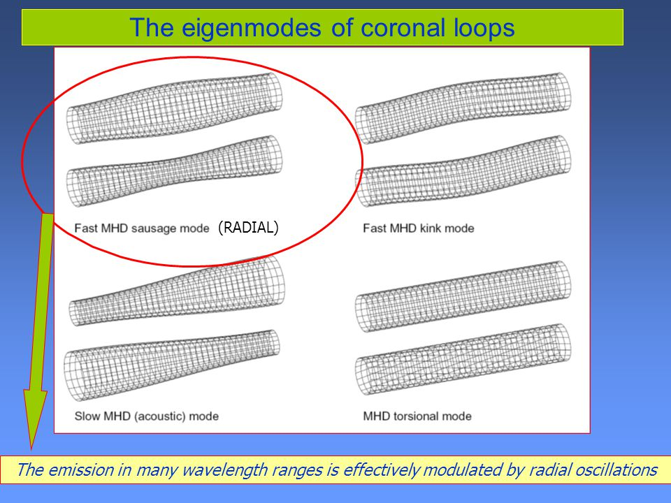 The eigenmodes of coronal loops The emission in many wavelength ranges is effectively modulated by radial oscillations (RADIAL)