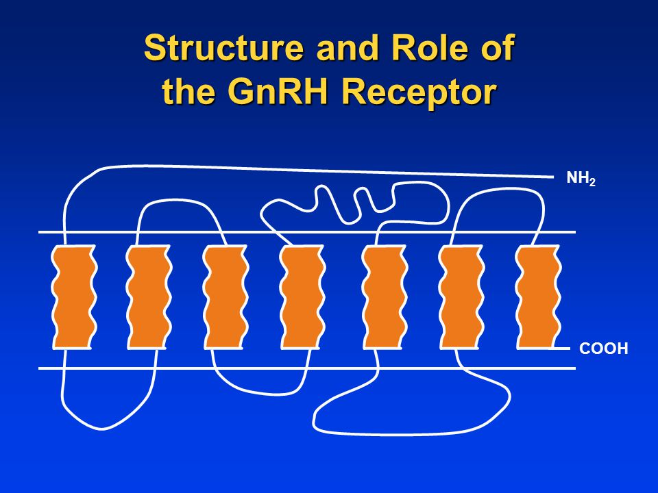 NH 2 COOH Structure and Role of the GnRH Receptor