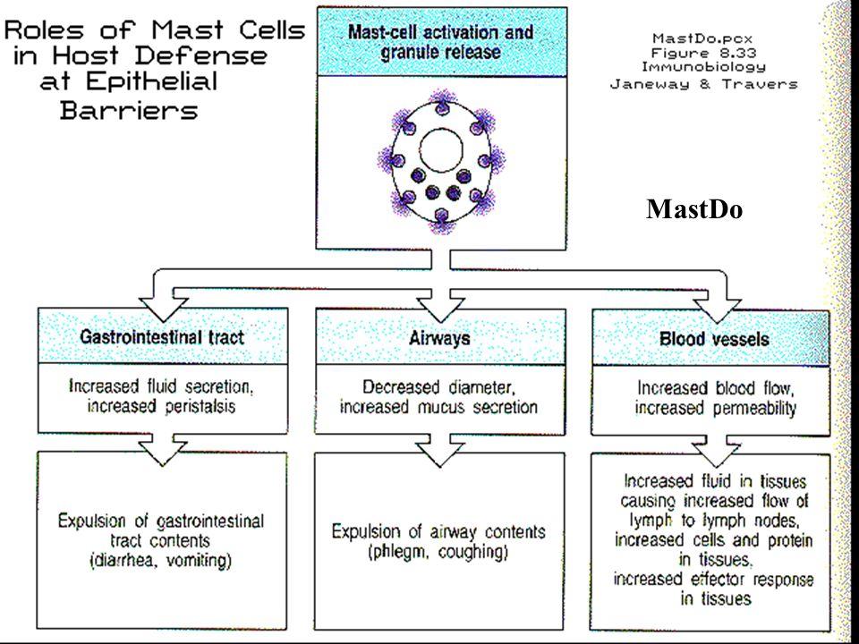 Roles of Mast Cells (MastDo) MastDo