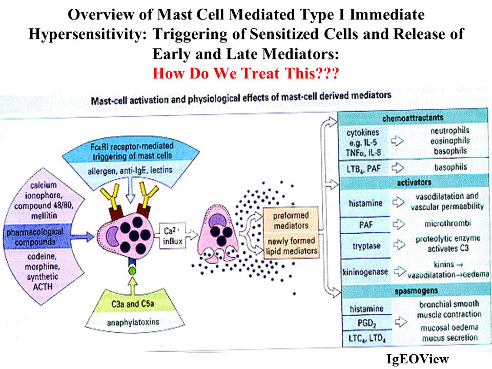 Overview of Mast Cell Mediated Type I Immediate Hypersensitivity: Triggering of Sensitized Cells and Release of Early and Late Mediators: How Do We Tr