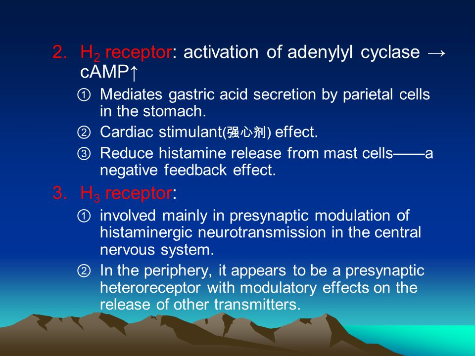 2.H 2 receptor: activation of adenylyl cyclase → cAMP↑ ① Mediates gastric acid secretion by parietal cells in the stomach.