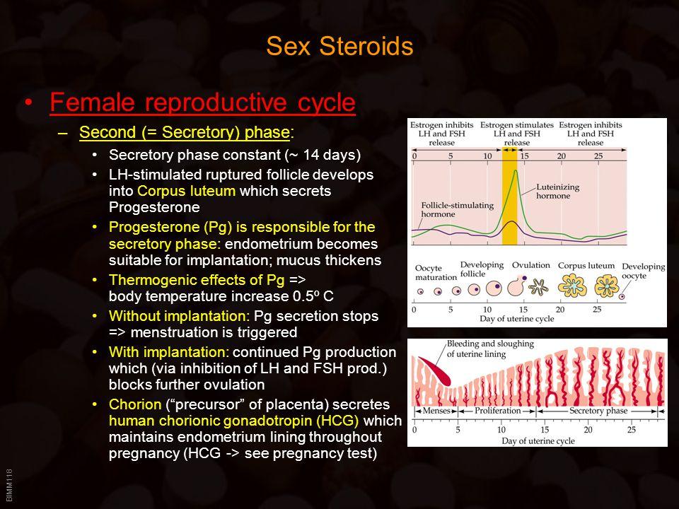 BIMM118 Sex Steroids Female reproductive cycle –Second (= Secretory) phase: Secretory phase constant (~ 14 days) LH-stimulated ruptured follicle devel