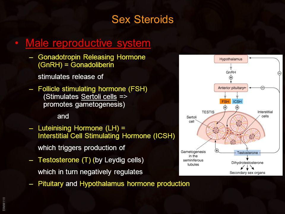 BIMM118 Sex Steroids Male reproductive system –Gonadotropin Releasing Hormone (GnRH) = Gonadoliberin stimulates release of –Follicle stimulating hormo
