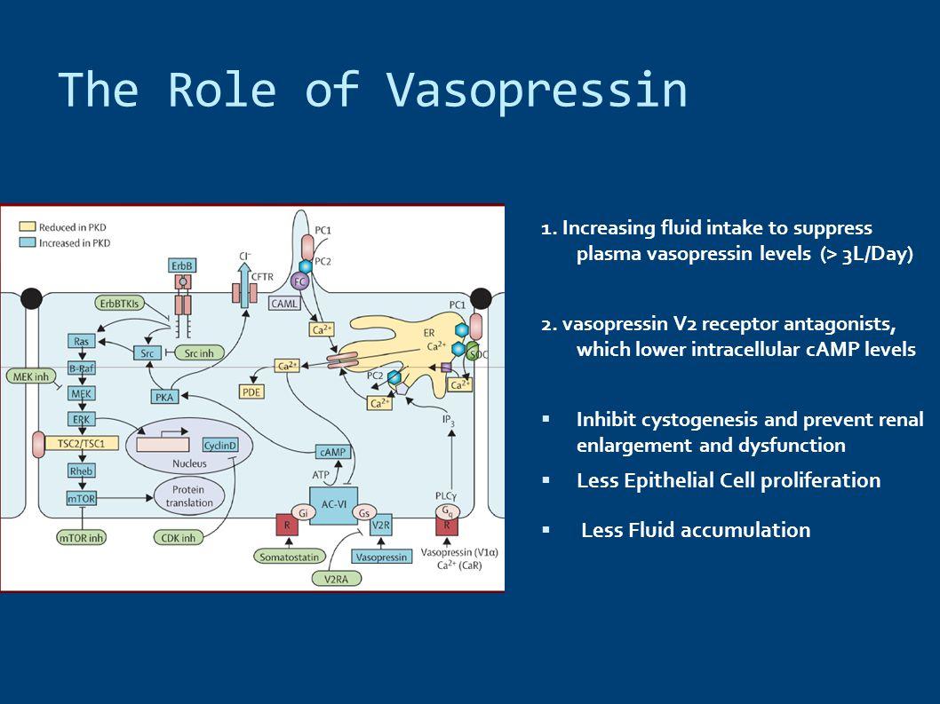 The Role of Vasopressin 1. Increasing fluid intake to suppress plasma vasopressin levels (> 3L/Day) 2. vasopressin V2 receptor antagonists, which lowe