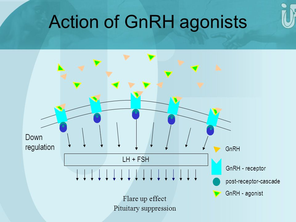 LH + FSH post-receptor-cascade GnRH - receptor GnRH GnRH - agonist Down regulation Action of GnRH agonists Pituitary suppression Flare up effect