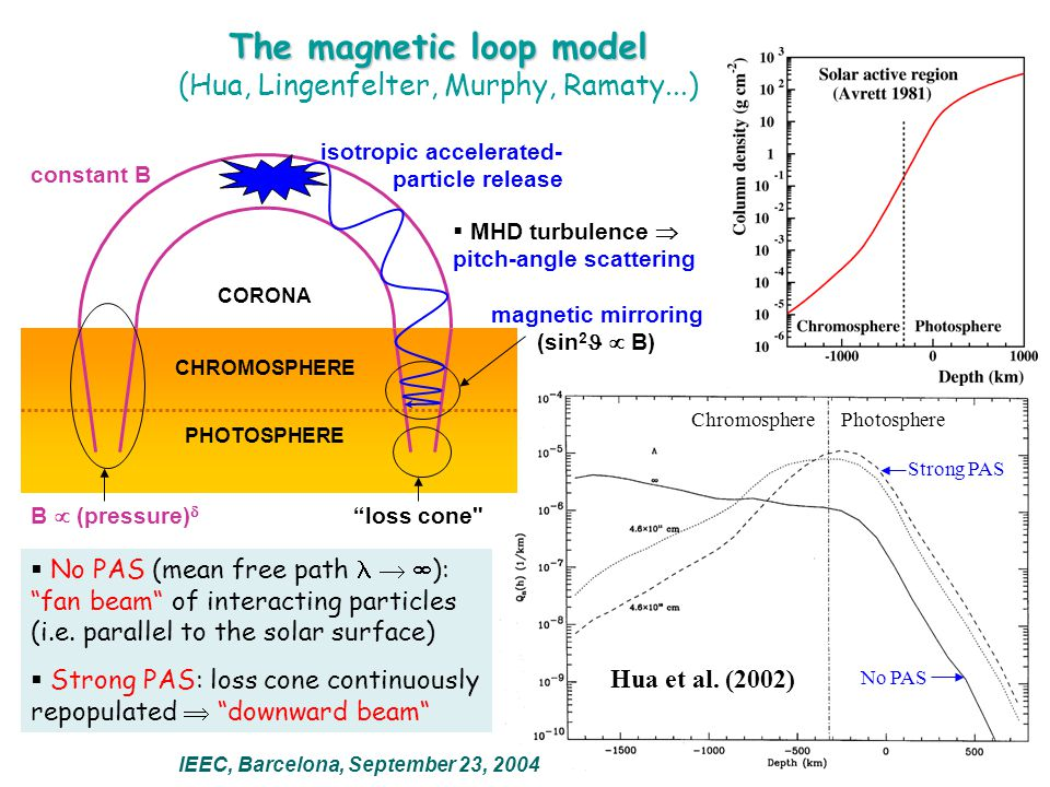 ChromospherePhotosphere No PAS Strong PAS The magnetic loop model IEEC, Barcelona, September 23, 2004 (Hua, Lingenfelter, Murphy, Ramaty...) CHROMOSPHERE PHOTOSPHERE CORONA isotropic accelerated- particle release  MHD turbulence  pitch-angle scattering B  (pressure)  constant B magnetic mirroring (sin 2  B) loss cone  No PAS (mean free path   ): fan beam of interacting particles (i.e.