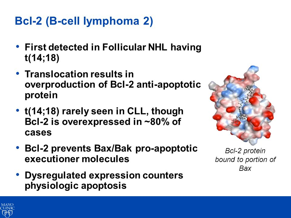 Bcl-2 (B-cell lymphoma 2) First detected in Follicular NHL having t(14;18) Translocation results in overproduction of Bcl-2 anti-apoptotic protein t(14;18) rarely seen in CLL, though Bcl-2 is overexpressed in ~80% of cases Bcl-2 prevents Bax/Bak pro-apoptotic executioner molecules Dysregulated expression counters physiologic apoptosis Bcl-2 protein bound to portion of Bax