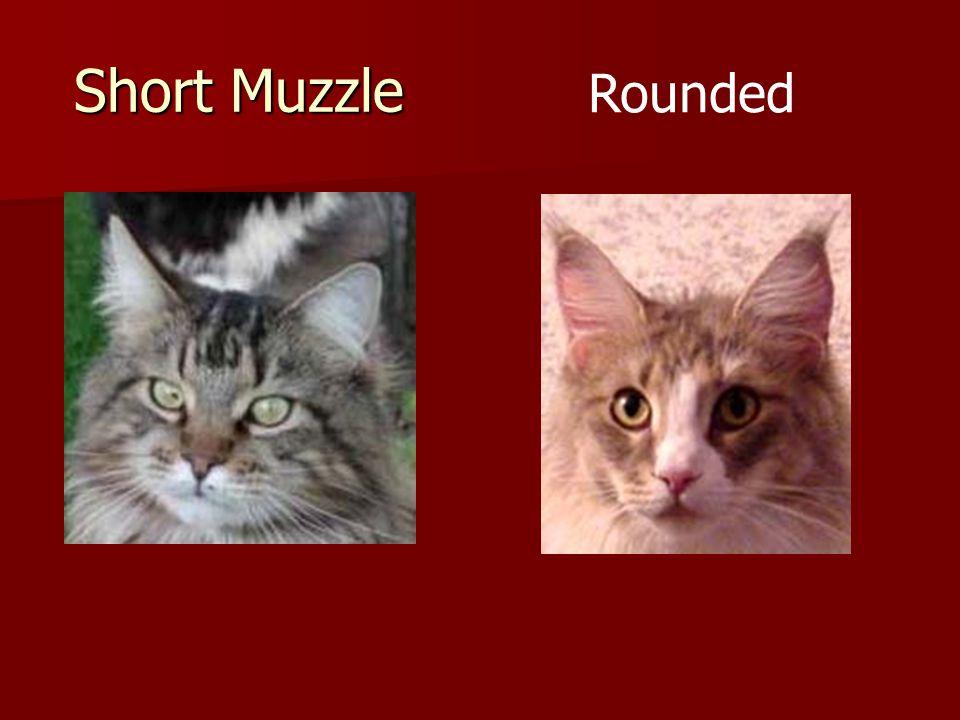Short Muzzle Rounded