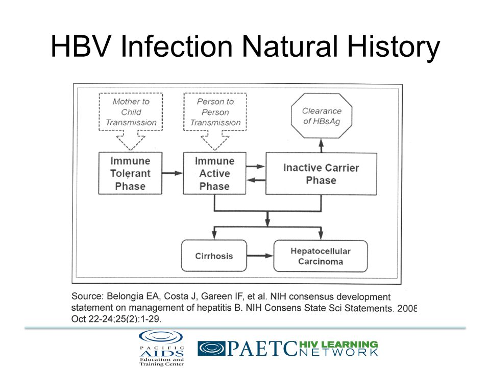 HBV Infection Natural History