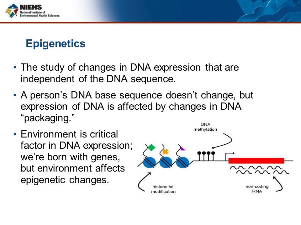 Epigenetics The study of changes in DNA expression that are independent of the DNA sequence. A person's DNA base sequence doesn't change, but expressi