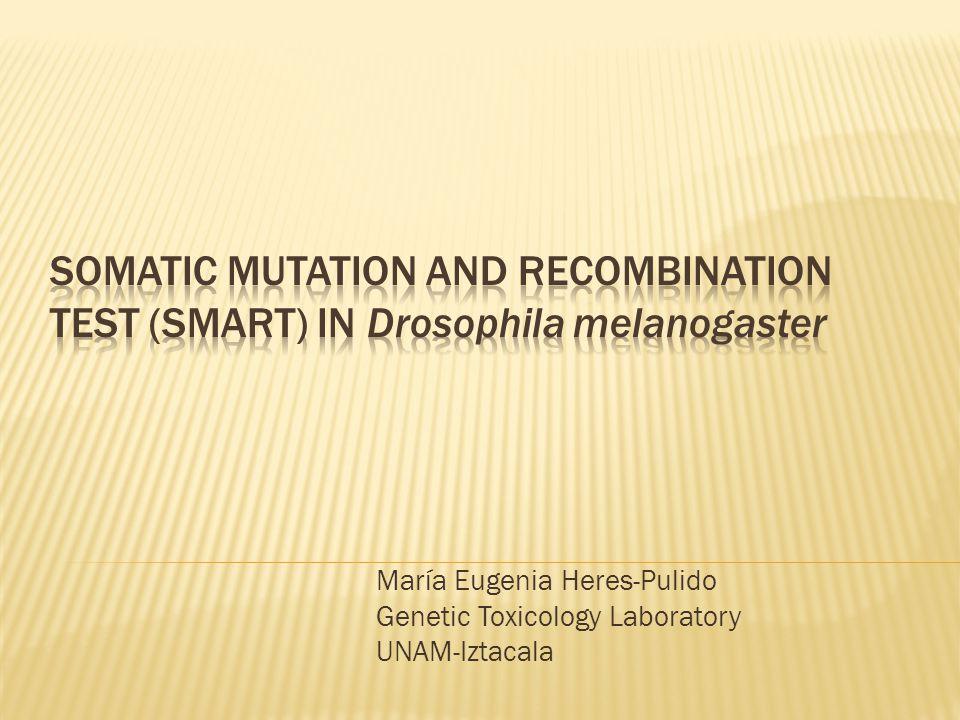 María Eugenia Heres-Pulido Genetic Toxicology Laboratory UNAM-Iztacala
