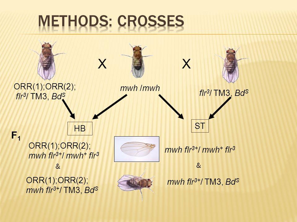 XX ORR(1);ORR(2); flr 3 / TM3, Bd S mwh /mwh flr 3 / TM3, Bd S ST HB F1F1 ORR(1);ORR(2); mwh flr 3+ / mwh + flr 3 ORR(1);ORR(2); mwh flr 3+ / TM3, Bd