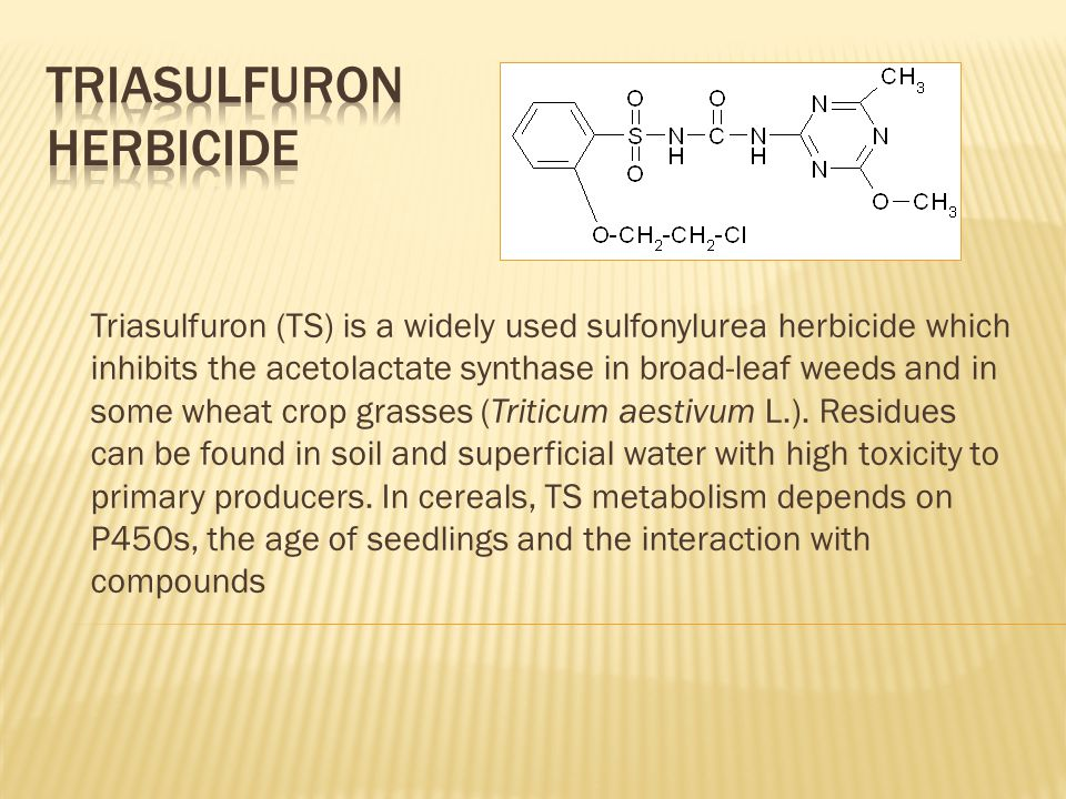 Triasulfuron (TS) is a widely used sulfonylurea herbicide which inhibits the acetolactate synthase in broad-leaf weeds and in some wheat crop grasses (Triticum aestivum L.).