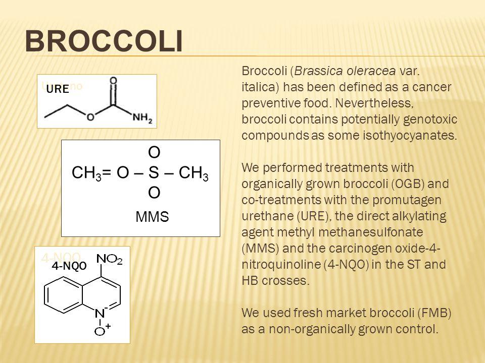 BROCCOLI O CH 3 = O – S – CH 3 O MMS Uretano URE 4-NQO Broccoli (Brassica oleracea var. italica) has been defined as a cancer preventive food. Neverth