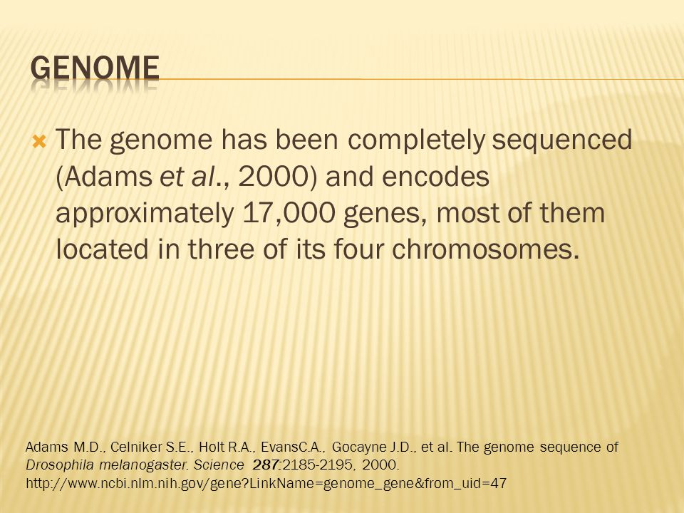  The genome has been completely sequenced (Adams et al., 2000) and encodes approximately 17,000 genes, most of them located in three of its four chromosomes.