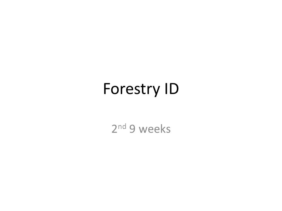 Forestry ID 2 nd 9 weeks