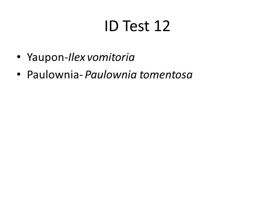 ID Test 12 Yaupon-Ilex vomitoria Paulownia- Paulownia tomentosa