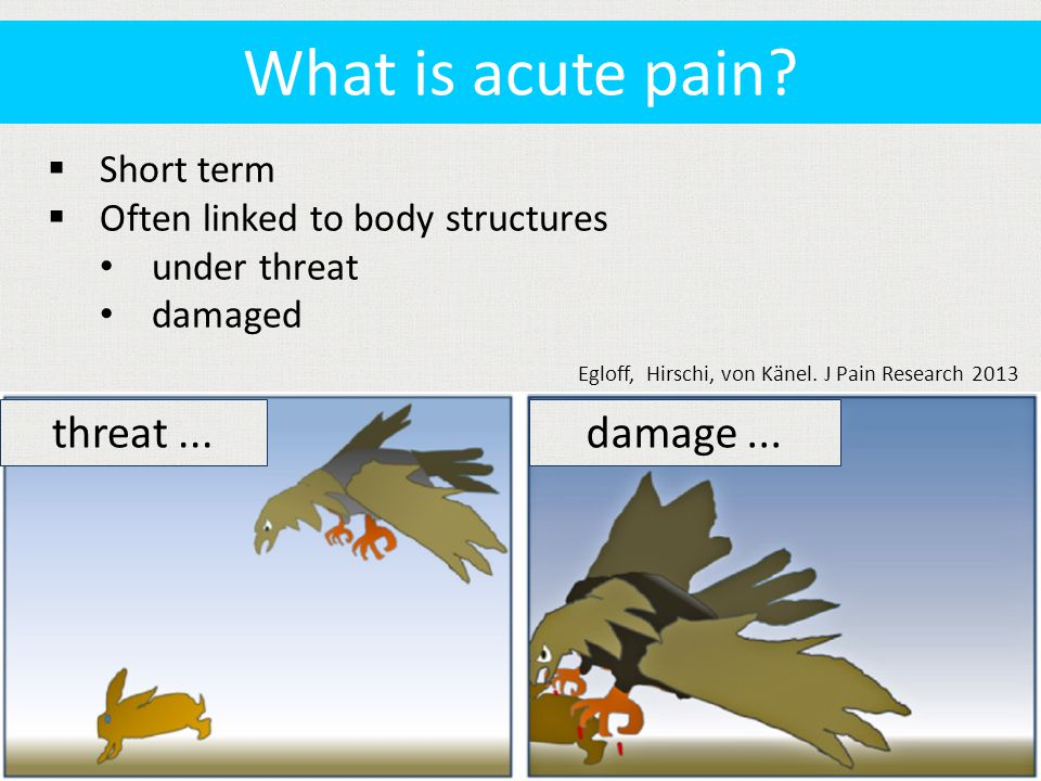  Short term  Often linked to body structures under threat damaged What is acute pain.
