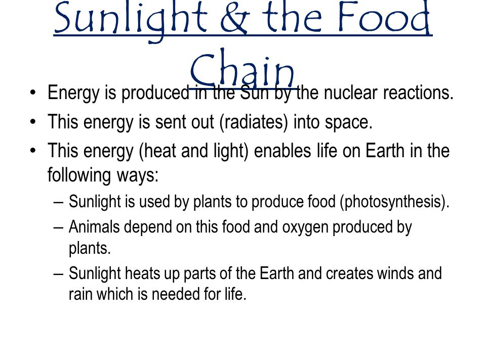 Sunlight & the Food Chain Energy is produced in the Sun by the nuclear reactions.
