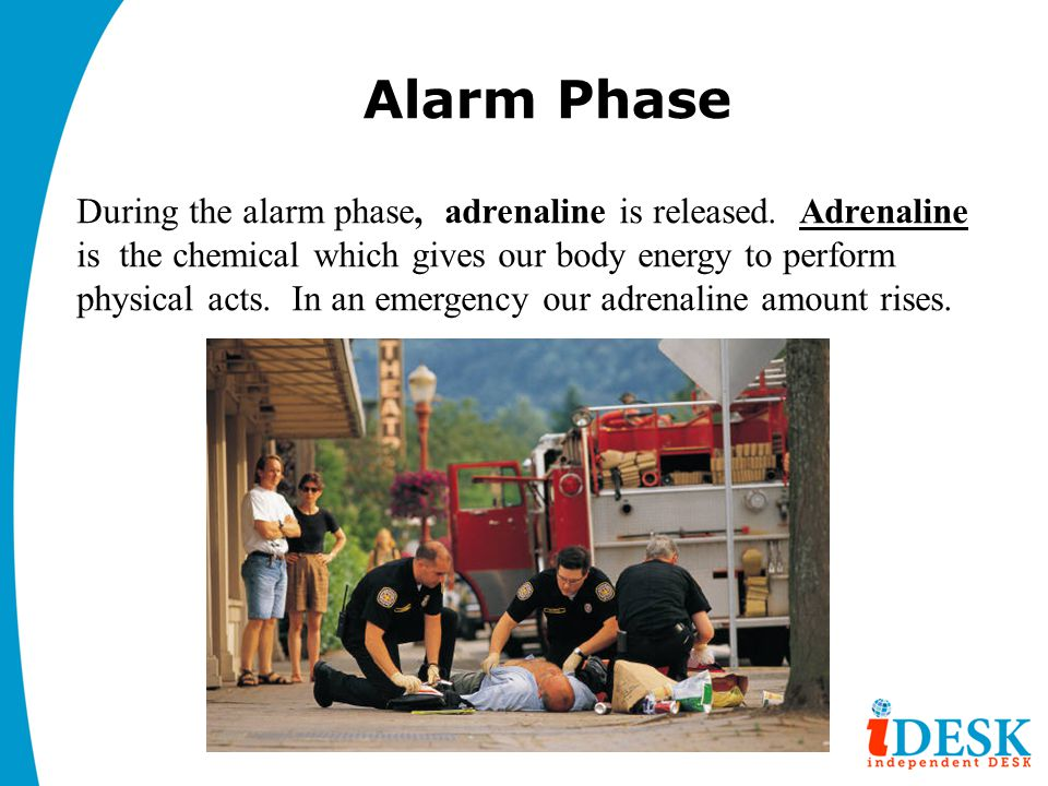 Alarm Phase During the alarm phase, adrenaline is released.