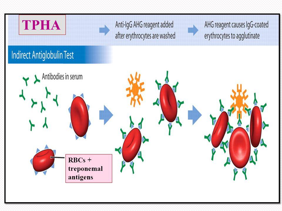 RBCs + treponemal antigens TPHA