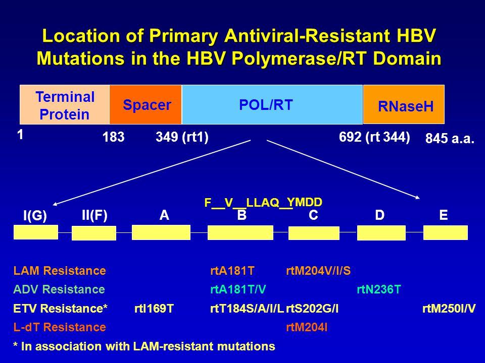 Location of Primary Antiviral-Resistant HBV Mutations in the HBV Polymerase/RT Domain LAM Resistance rtA181TrtM204V/I/S ADV ResistancertA181T/VrtN236T ETV Resistance*rtI169TrtT184S/A/I/LrtS202G/IrtM250I/V L-dT ResistancertM204I * In association with LAM-resistant mutations 845 a.a.