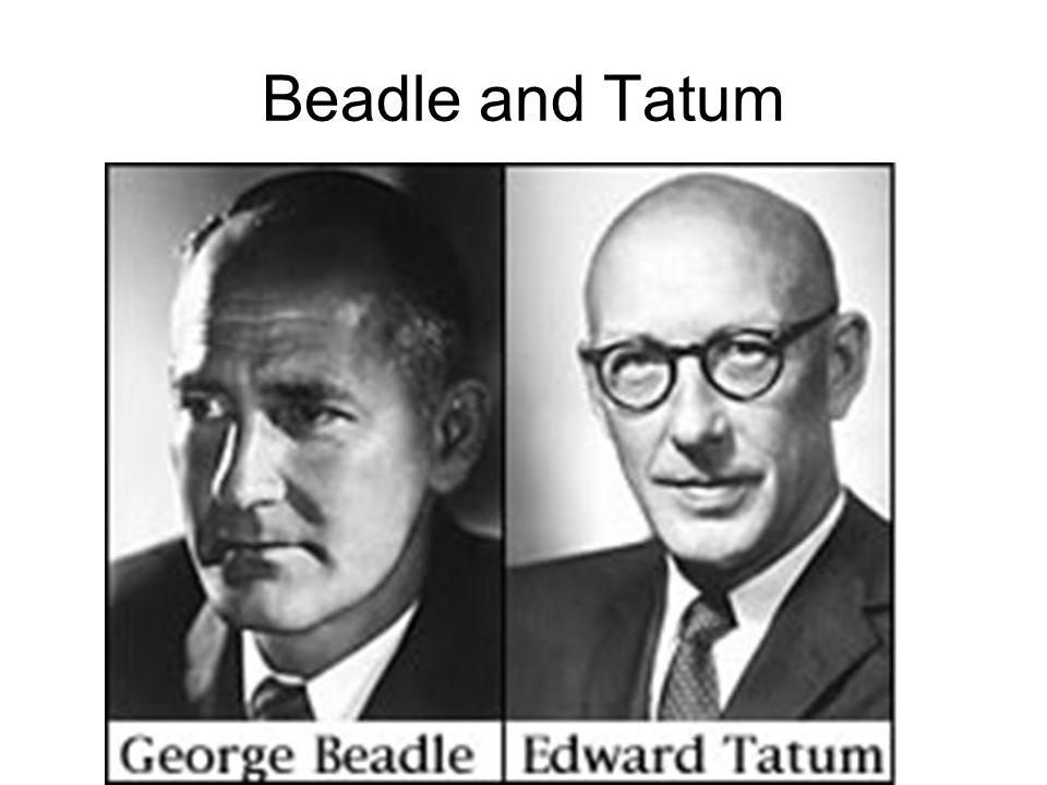 Beadle and Tatum