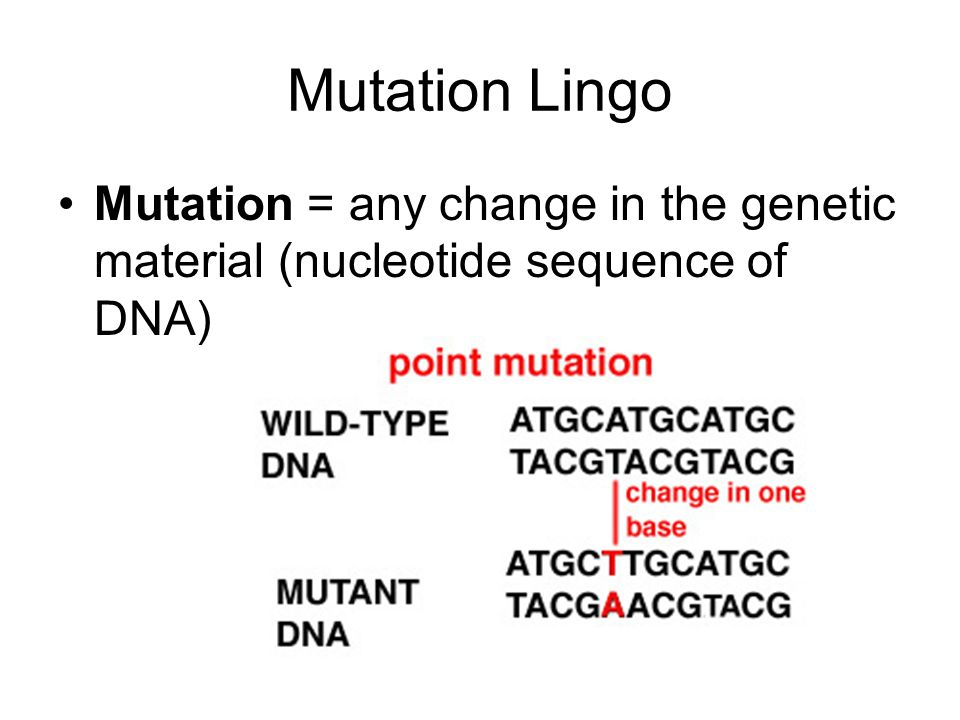 Mutation Lingo Mutation = any change in the genetic material (nucleotide sequence of DNA)