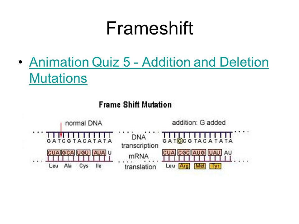 Frameshift Animation Quiz 5 - Addition and Deletion MutationsAnimation Quiz 5 - Addition and Deletion Mutations