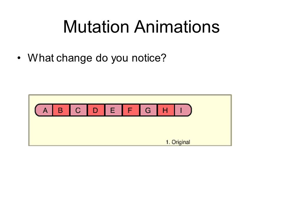 Mutation Animations What change do you notice