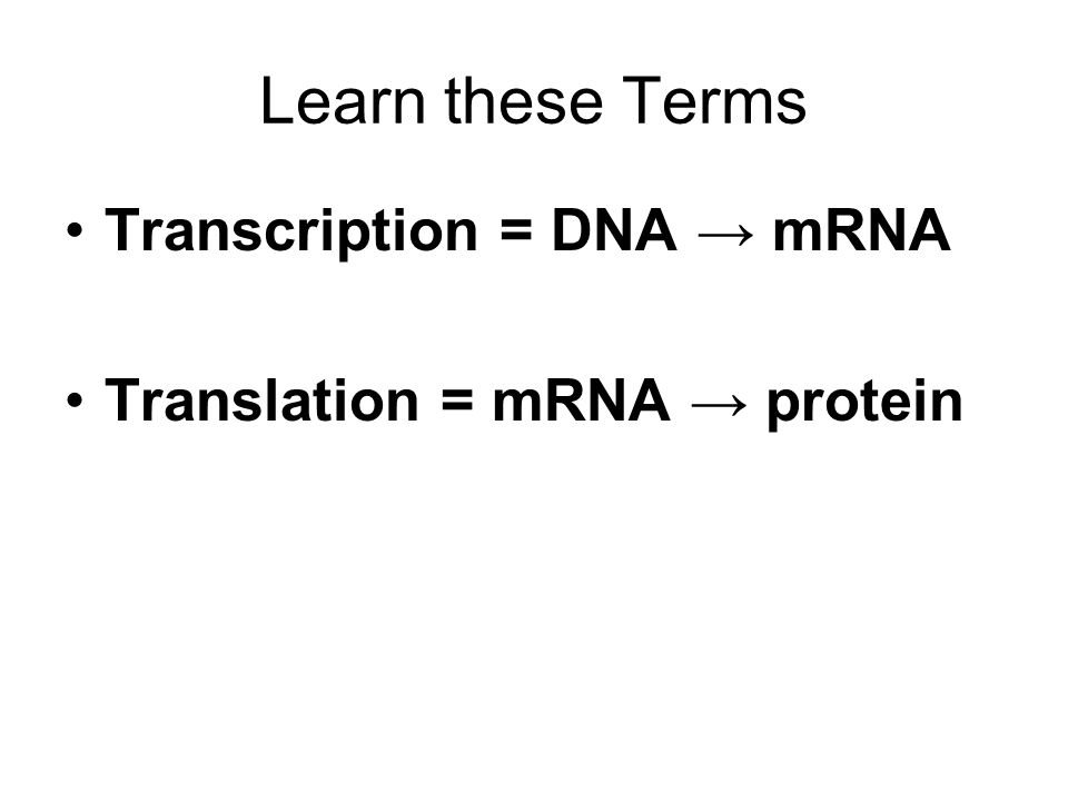 Learn these Terms Transcription = DNA → mRNA Translation = mRNA → protein