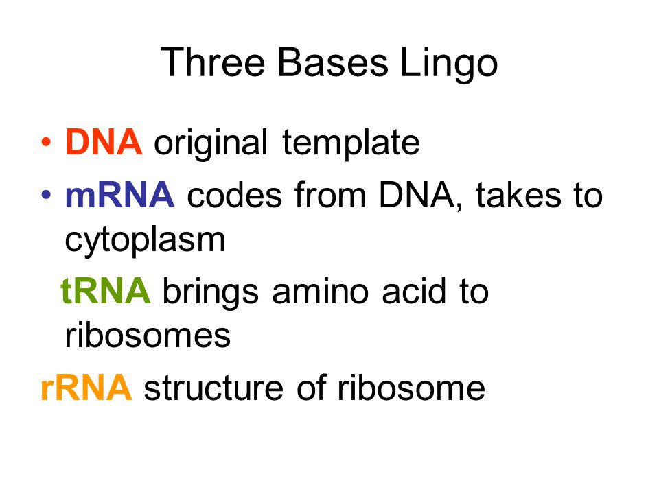 Three Bases Lingo DNA original template mRNA codes from DNA, takes to cytoplasm tRNA brings amino acid to ribosomes rRNA structure of ribosome