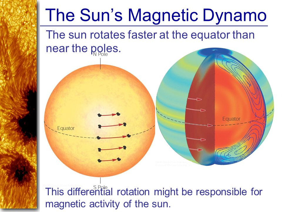 The Sun's Magnetic Dynamo This differential rotation might be responsible for magnetic activity of the sun. The sun rotates faster at the equator than