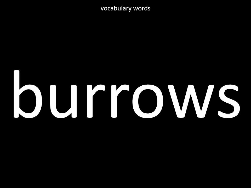 burrows vocabulary words